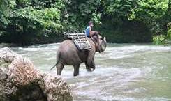 Eventyr rejser, person rider elefant