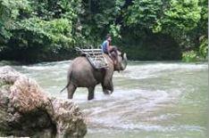 Rejse til Sumatra, person rider elefant over floden
